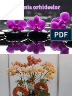 Simfonia orhideelor 1