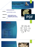 micropaleontolgia