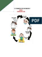 Cadena Epidemiologica de Los 3 Virus