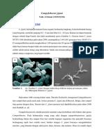Campylobacter Jejuni by Yafie Al Islami