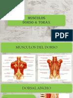 MUSCULOS TORAX.pptx.pptx