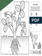 ciencia-plantas-marcador