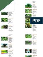 Deficiencias Nutricionales en Palma de Aceite