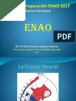 1 Embriología Del Aparato Branquial