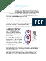 El Aparato Circulatorio Sanguíneo (1)