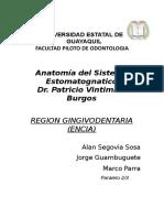 Grupo#3 Region Gingivodentaria(Encia)