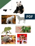 Animales Plastilina