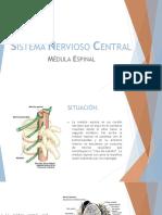 Sistema Nervioso Central 10