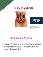 4urinarysystem-170708071824