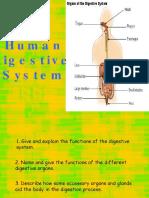 humandigestivesystem-090814185124-phpapp02