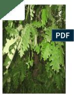 ecosisteme pomi