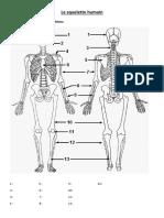 Exercice Corrige Le Squelette Humain 3eme 4eme Primaire PDF