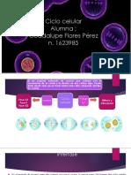 Ciclo Celular Histologia