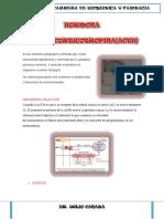 LOBULO-ANTERIOR (1).docx