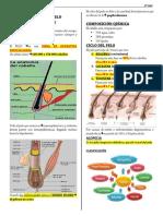 1 PATOLOGIA DE PELO.pdf