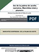 EXPOSICIÓN PALMA.pptx