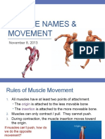 Muscle Names and Movement