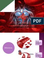 Arterias y Venas Copia