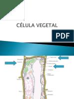 CÉLULA VEGETAL2