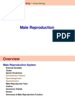 Lecture 22 Male and Female Reproductive Systems