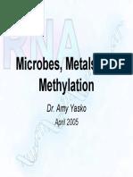 Dr.amy Yasko Microbes Metals Methylation