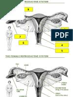 Adneksitis, Peritonitis, Pelvisitis, Salphingitis Dan Kelainan Ovarium
