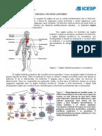 ÓRGÃOS e TECIDOS LINFOIDES.pdf