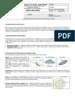Guia Locomocion. Biologia.7-3