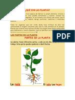 Qué Son Las Plantas