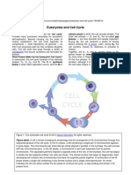 Cell Cycle (Scitable)