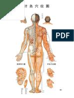 Meridian Chart 针灸挂图.pdf