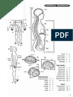 186579192 Princeton Review Anatomy Coloring Workbook