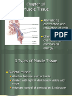Chpt 10  Muscle Tissue.ppt