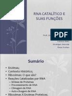 Ribozimas RNA Catalítico