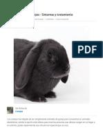 La Coccidiosis en Conejos - Síntomas y Tratamiento - ExpertoAnimal