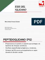 biosíntesis del peptidoglicano