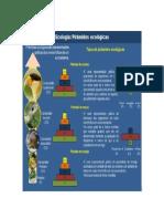 Pirâmides Ecológicas1