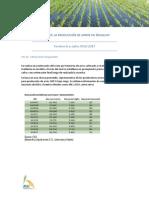 Costo de La Producción de Arroz en Uruguay INFORME
