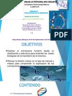 Mitosis y Meiosis Completas (1)