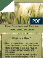 Intro to Plants
