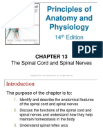 Ch13 Modified Spinal Cord
