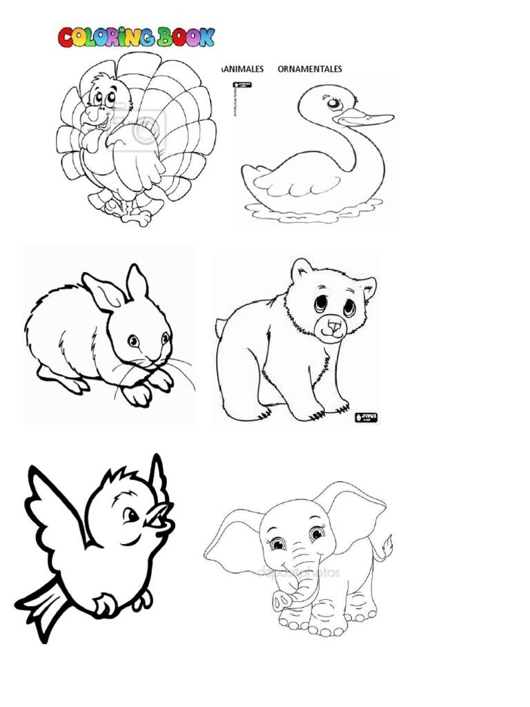 Animales Aereos Para Colorear