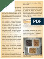 cambui folder embrapa.pdf