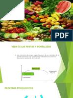 Presentación morfologica.pptx
