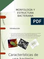 Morfología y Estructura Bacteriana-diapositiva