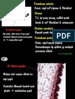 Kuliah - Histo - Mata 2 (Edit&Print)