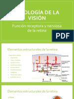 Fisiología de La Visión II