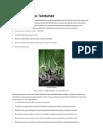Dasar Klasifikasi Tumbuhan Anna