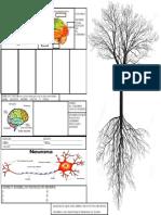 Cerebro, Partes, Sentidos y Neurona