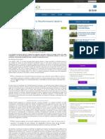 Aportes Para El Estudio de La Filosofía Forestal Desde La Praxis Peruana